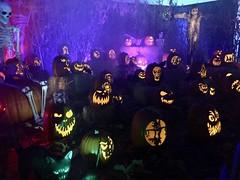 Wicked Pumpkin Hollow at Midsummer Scream (JacksonSha) Tags: wickedpumpkinhollow pumpkin patch jackolanterns creatures midsummer scream halloween horror convention 2018 scarecrow skeleton spooky carvings sherman oaks