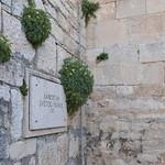 Štit samostana sv. Franje u Puli (132PEACE_0385) thumbnail