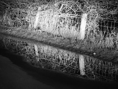 AS NATURAL AS THE RAIN THAT FALLS (Poppy ♥ Cocqué ♫) Tags: puddle water rain fence hff reflection grass road tarmac ap poppy poppycocqué headlights throughwindscreen frommovingcar night nighttime