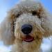 Riesling my Dog 🐶