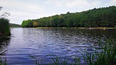 Felfrissülés az erdő mélyén (Hársas-tó, Máriaújfalu) (milankalman) Tags: landscape green nature