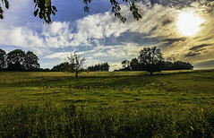 two trees (ontronix) Tags: ifttt 500px tree trees two landscape german germany wuppertal sky blue summer