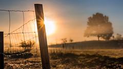 Silent misty morning (lensflare82) Tags: mist fog nebel morgen morning tree baum natur nature outdoor sonne sun soleil panorama atmosphere atmosphäre landschaft landscape silence stille sunrise sunset himmel sky shutterbug sonnenuntergang sonnenaufgang explored explore pixoom