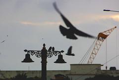 Early bird (Debmalya Mukherjee) Tags: bird morning dawn mumbai debmalyamukherjee canon550d 18135 silhouette