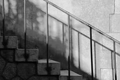 Comme les barreaux d'une cage (Tonton Gilles) Tags: alençon normandie noir et blanc ombres rambarde boulevard de la république rue fuie des vignes escalier marches graphisme