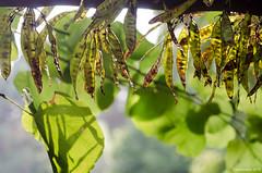 16082018-DSC_5591_33930.jpg (Patrice Dx) Tags: coloma jardindesroses colomakasteel jardin roseraie