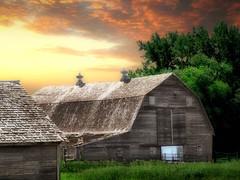Old barn 5 (mrbillt6) Tags: landscape rural prairie barn farm tree buildings sky outdoors country countryside northdakota