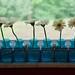 windowsill daisys