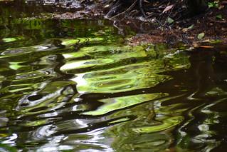 l'eau de l'Aven