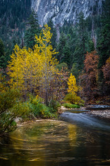Fall Colors in the Merced River (Jeffrey Sullivan) Tags: yosemite park yosemitevalley fall colors california usa landscape photography nature leaftrails mercedriver river colorful leaves night travel national