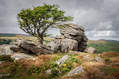 That Tree and Those Rocks (Rich Walker Photography) Tags: dartmoor devon nationaltrust nature trees tree rock rocks tor cloud sky moody dark rain wind landscape landscapes landscapephotography landmark landmarks canon england efs1585mmisusm eos80d outdoor hawthorn