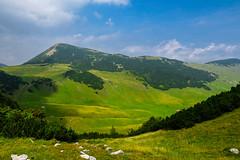 Vranica mountain, Bosnia and Herzegovina (HimzoIsić) Tags: landscape mountain mountainside mountaineering grassland grass green outdoor nature wood forest plant