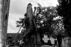 Le chêne d'Allouville (Philippe_28) Tags: allouville bellefosse 76 seinemaritime chêne pédonculé oak arbre awesome tree normandie normandy 24x36 argentique analogue camera photography film 135 bw nb remarquable