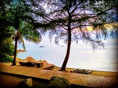 J17, 83200 Senggarang, Johor https://goo.gl/maps/VWHNJjq3pjN2  #travel #holiday #旅行 #度假 #亞洲 #馬來西亞 #trip #traveling #beach #海滩 #pantai #วันหยุด #การเดินทาง #ホリデー #휴일 #여행 #праздник #путешествие #ビーチ #바닷가 #ชายหาด #пляж #tree #nature #Johor #BatuPahat #dusk # (soonlung81) Tags: trip batupahat วันหยุด vacanza johor beach malaysia путешествие vakantie 휴일 馬來西亞 旅行 пляж reise spiaggia nature dusk semester pantai 黃昏 ชายหาด 여행 asian plage voyage reizen strand 海滩 度假 바닷가 traveling ビーチ urlaub ホリデー การเดินทาง holiday праздник tree playa vacances fiesta viaggio 亞洲 viaje travel
