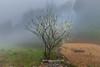_J5K1756.0218.Phố Cáo.Đồng Văn.Hà Giang. (hoanglongphoto) Tags: asia asian vietnam northvietnam northeastvietnam landscape scenery vietnamlandscape vietnamscenery vietnamscene hagianglandscape spring morning mist trees plumblossom hdr canon canonef2470mmf28liiusm đôngbắc hàgiang đồngvăn phốcáo phongcảnh phongcảnhhàgiang bảnlàng buổisáng mùaxuân hàgiangmùaxuân hoamận sươngmù mùaxuânhàgiang hoamậnhàgiang canoneos1dsmarkiii