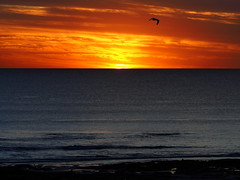 Time to go home! (Digidoc2 - OFF (unwell - Recuperating)) Tags: seagull bird sunset dramaticsky dusk twilight sun silhouette evening backlit ocean indianocean beach rocks sand shoreline reflections water waves clouds landscape seascape