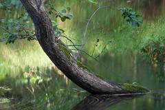 Lynda river (WilliamBee) Tags: tree water river reflections green wildlife nature landscape beautiful árbol agua reflexiones verde naturaleza paisaje hermoso