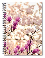 magnolia-branches-carlene-smith (Fine Arts Designer) Tags: notebook notebooks writing write stationaery paper spiral