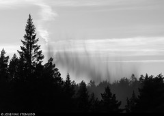 20180801_12 Lime cloud falling into the lake Stora Hällesvattnet, where I camped | The trail Bohusleden, section 14 - Bovik to Metsjö | Bohuslän, Sweden (ratexla) Tags: ratexlasbohusledenhike bohusleden bohusledenetapp14 1aug2018 2018 canonpowershotsx50hs bohuslän sweden sverige scandinavia scandinavian europe earth tellus travel travelling traveling journey epic photophotospicturepicturesimageimagesfotofotonbildbilder wanderlust vacation holiday semester trip backpacking resaresor europaeuropean sommar summer ontheroad beautiful nature landscape scenery scenic nordiccountries norden skandinavien hiking hike forest skog storahällesvattnet blackandwhite bw blackwhite monochrome svartvitt svartvit svartvita lime liming kalk kalkning kalkar favorite