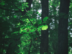 Forest (Łukasz Rawa) Tags: forest trees leaves nature bokeh olympus olympusm45mmf18 omd