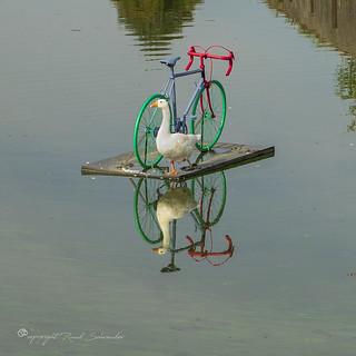 One legged hydro cyclist