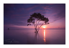 Alone tree (NguyenTrongNhan I 0986.530.530) Tags: alonetree tree sunrise gocong vietnamlandscapes vietnam landscapes sunset sun