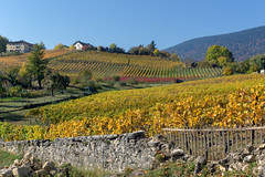 Vineyards at Boudry (Bephep2010) Tags: 2017 77 alpha berg boudry herbst himmel landschaft mauer neuchâtel neuenburg sal1650f28 schweiz sony switzerland wein weinberg autumn gelb landscape mountain sky sonnig sunny vineyard wall wine yellow ch