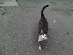 IMG19591 (chicore2011) Tags: tabby talking