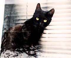 Mew Orleans (kirstiecat) Tags: cat feline chat gato blackcat blackcatappreciationday caturday neworleans meworleans kitty chatnoir window