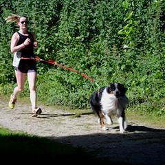 Cani Cross Brest 24062018 (Echappées Breizh by Joel MARC) Tags: echappée brezih joel marc photos cani cross brest denis ceca juin 2018 keroual