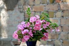Wochenendblümchen - some flowers for you all (Sockenhummel) Tags: blüten sommerfest töpchin blumen flowers blumenstraus kiallinchen wand mauer wall