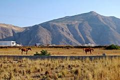 Perissa Santorini (plot19) Tags: perissa santorini greece greek landscape horse field sun plot19 photography nikon