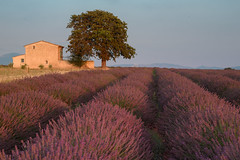 Plateau de Valensole (bautisterias) Tags: provence provenza france francia summer flowers fleurs fiori vangogh cézanne provençal southoffrance midi lavender lavande プロヴァンス 花 lavanda purple fields champsdelavande valensole plateaudevalensole fontaines d750 light sunset thunderstorm colours color country ruralfrance rural house field isolated alone dusk evening nikon
