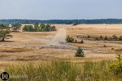 Veluwe Fields (Luke Hermans Photography) Tags: veluwe field dry droog veld netherlands nederland natuur nature canon 750d landscape landschap grass gras bomen trees