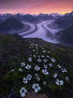 Serendipity (Gilkey Glacier, Juneau, Alaska)
