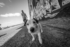 just a dog portrait :-)) (Hendrik Lohmann) Tags: streetphotography dog dogs blackandwhite bnw bw portugal monochrome nikondf nikon