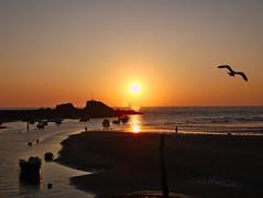 Makes me sick (Eric_Lumix GX80) Tags: dawn sun beach bird gx80 england landscape nature sea orange purehate makesmesick cornwall
