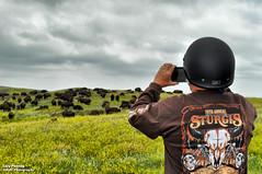 Aug 1 2018 - Heath shooting the Black Hills wildlife (La_Z_Photog) Tags: lazy photog elliott photography worland wyoming south dakota black hills custer state park wildlife loop iron mountain road hill city