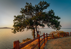 Tree and Fence at Sunset, with Carneros Hills (Thanks for 1.3 million views) Tags: sanpablo bay marin california tree sunset