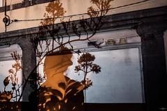 Ombres Chinoises (TristanLohengrin) Tags: portrait ombres shadows plants plantes fleurs flowers nikon d5300