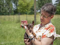 Ooligan - 3 mois et demi (Philippe Bélaz) Tags: ooligan pragois ratierdeprague animal animaux animauxdecompagnie chien chiots famille été événement