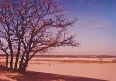 De Loonse en Drunense Duinen (Der Ohlsen) Tags: kodakultrazoom einwegkamera singleusecamera analog 35mm kb expired colour film c41 deloonseendrunenseduinen netherlands niederlande