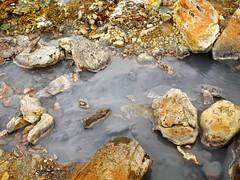 Seltún / Krýsuvík (kenjet) Tags: seltúnkrýsuvík seltún krýsuvík geothermal field fields mud mudpots springs iceland nature natural landscape water