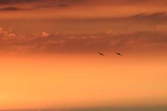 DSC_7256.jpg (johncireland) Tags: cromer sunset norfolk