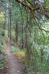 2018-08-18 Whistle Lake Trail 205 (13) (680x1024) (-jon) Tags: anacortes skagitcounty skagit fidalgoisland sanjuanislands washingtonstate washington pnw pacificnorthwest salishsea pugetsound acfl anacortescommunityforestlands whistlelake lake trail path 205 nikon nikonl22 tree douglasfir fern alder summer woods forest a266122photographyproduction hiking hike walk walking