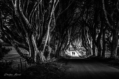 Ireland 2018 - Dark Dark Hedges [EXPLORED] (cesbai1) Tags: got game thrones dark hedges ireland irlande irlanda irlandia grande bretagne noir et blanc black white nb bw inexplore explore explored