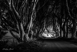 Ireland 2018 - Dark Dark Hedges [EXPLORED]