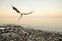 by the sea (Vlastelin Nichego) Tags: dolls abjd bjd cuarto cuartodolls darkhorn