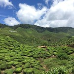 Cameron Highlands (15-16 July)