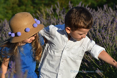 Spensieratezza (Gianni Armano) Tags: lavanda lu monferrato alessandria piemonte italia foto gianni armano photo flickr